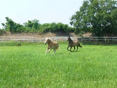 楽しそうに走る馬達