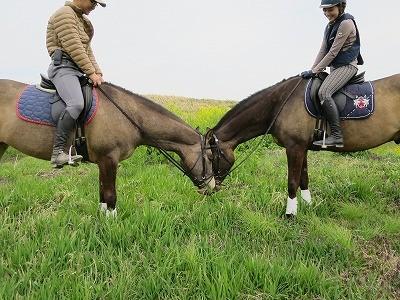 馬にとって人と付き合うことが楽しいことでありますように