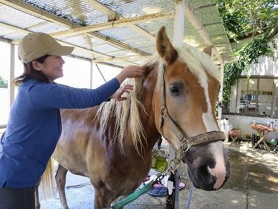 馬と向き合う