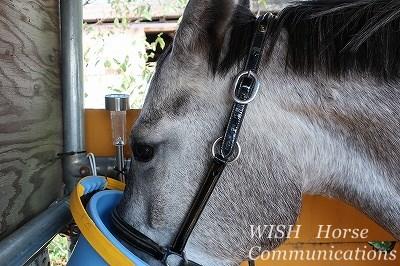 特製の可愛い馬たち
