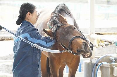 馬と共にある幸せ