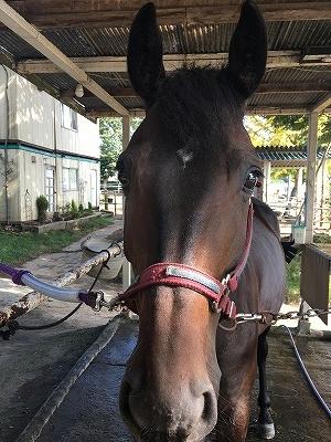 可愛いは信頼関係と馬の内面から