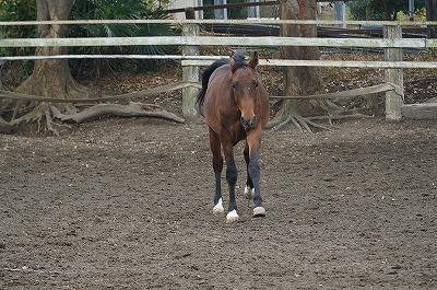 馬も愛情がわかる。当然のことだよね