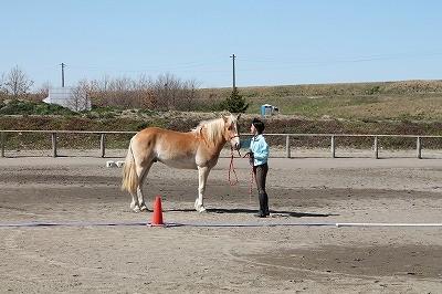 馬を愛するということ