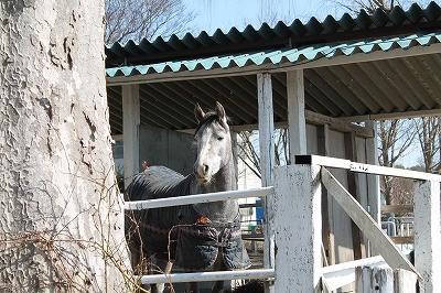 タレ目の可愛い馬