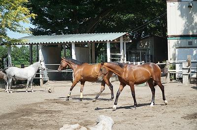 理性的な人が育てれば、馬は理性的に成長する