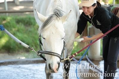 乗馬は馬が幸せでおとなしいのが一番