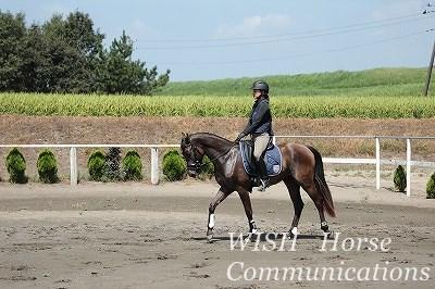 内国産乗用馬