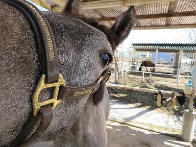 馬と仲良しになりたい可愛い馬が待っている