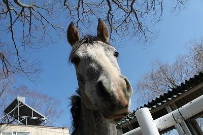 タレ目の馬