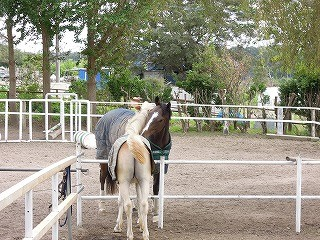 夢の乗馬クラブを作りたい