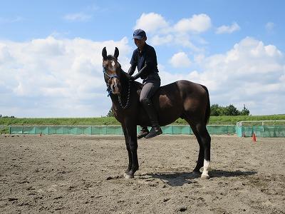 幸せな乗馬経験