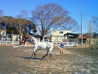 馬のグラウンドワーク