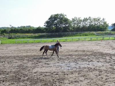 馬といろいろゲーム!