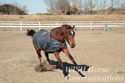 走ってくる馬