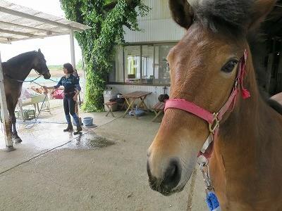 新馬調教 リーディングの重要性