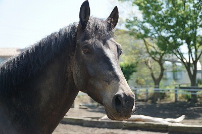 馬の自然な表情