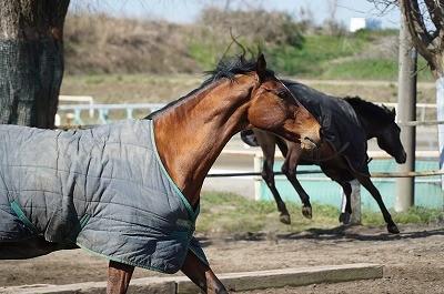 乗馬は安心