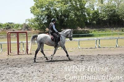 乗馬で夏の始まりを感じました