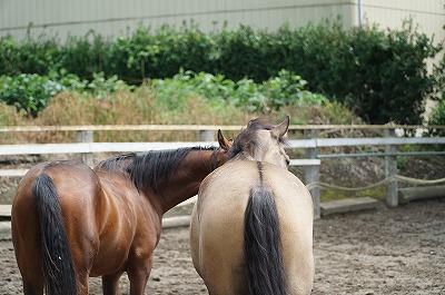 馬のお尻は丸いもの