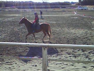 馬とゲームしよう!