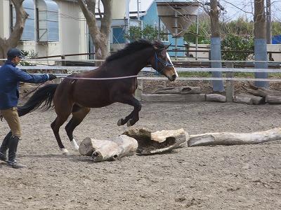 馬の可能性を信じよう