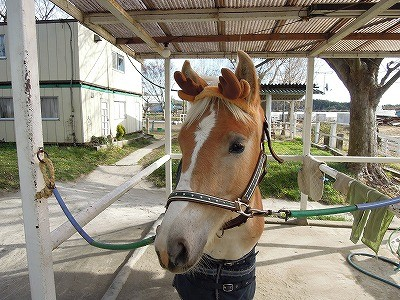 馬がトナカイに!の可愛い写真