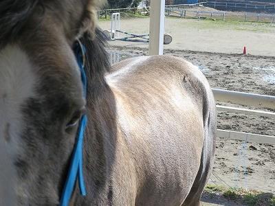 乗馬は馬の健康第一!