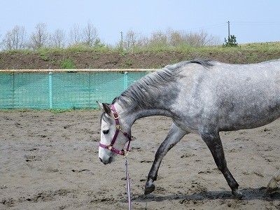 馬はリラックスが大切