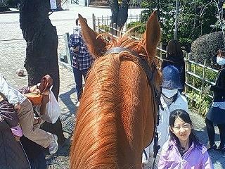馬とふれあい体験