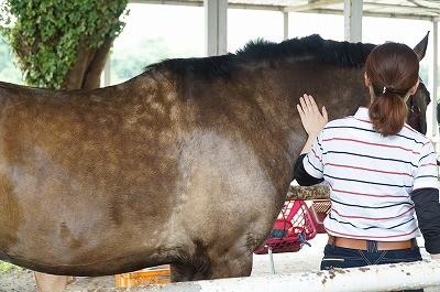 馬の体調が良い時に出る模様