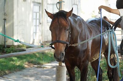 馬のこころが楽しさを決める
