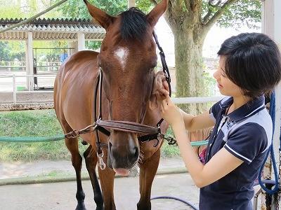乗馬の知識と実感