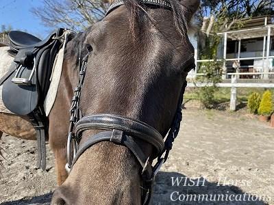 コミュニケーション乗馬