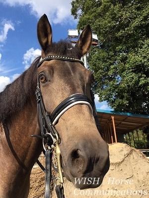 優しい愛馬と