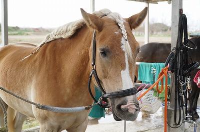 馬のたてがみ編み姉さん風