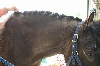 クリティカルシンキングの練習に乗馬はとてもいいかもね