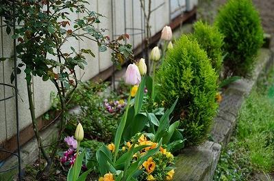 乗馬クラブの花壇