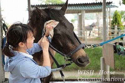 馬とのハッピーコミュニケーション