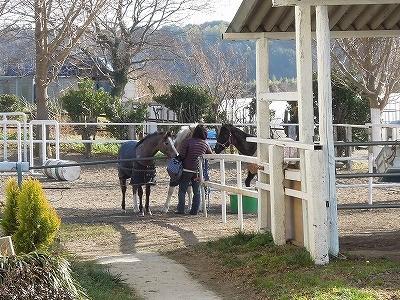 幸せな馬の写真