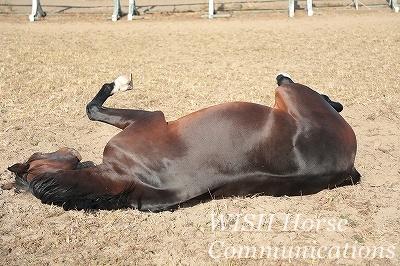 ピカピカの馬