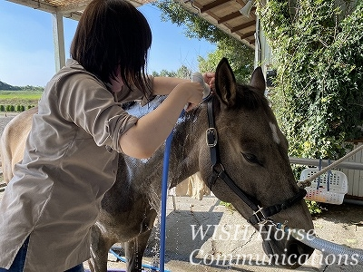 思いやりの馬手入れテクニック