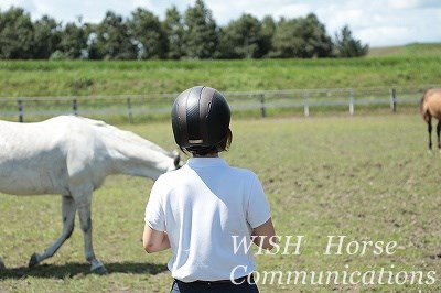 馬とお話しする乗馬