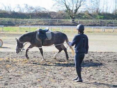 乗馬で馬と仲良く