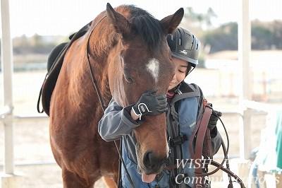 馬の愛情表現
