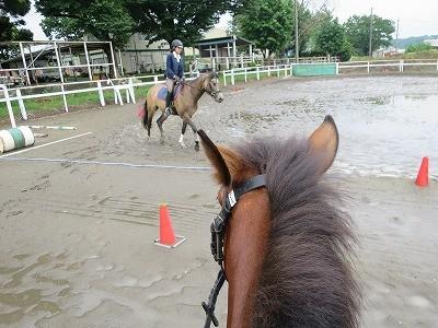 新馬調教 これで一通り完了!