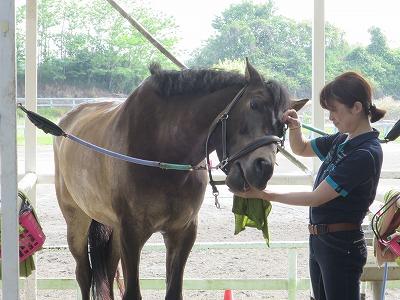 馬の気持ちいいときの顔
