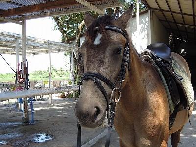 馬も乗馬を体験して学ぶ