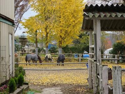 黄金色の中の馬達