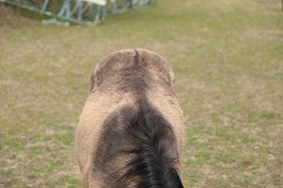 乗馬の毛色